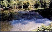 Critican a la Comisión Europea y piden se acabe con la contaminación en ríos extremeños