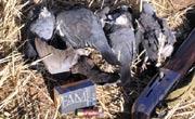 Decepción ante la modificación de la ley de protección animal de Extremadura