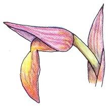 Día de la Orquídea.