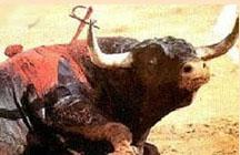 """¿Subvenciones a la """"cultura de los toros"""" en Extremadura?"""