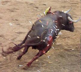 Campaña Internacional para la Abolición del Toro de Coria