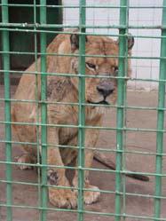 Denuncian en el Juzgado de instrucción al propietario del Zoo de Almendralejo