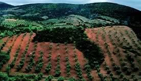 Los terratenientes copan en Extremadura las ayudas por la PAC.