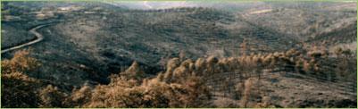 Extremadura, una de las Comunidades Autónomas con más incendios por causas sin aclarar